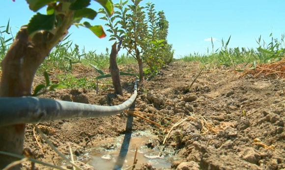 «Зеленые» технологии обеспечили фермерское хозяйство водой и электроэнергией