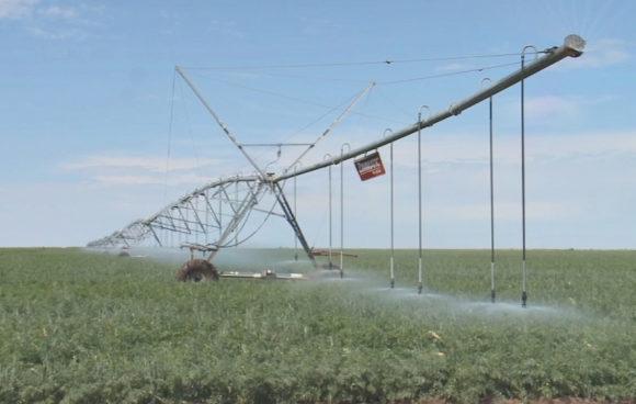 Передовые агротехнологии в растениеводстве используют в Аксуской сельской зоне