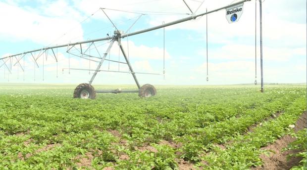 Австрийские бактерии помогут отечественным фермерам улучшить урожай