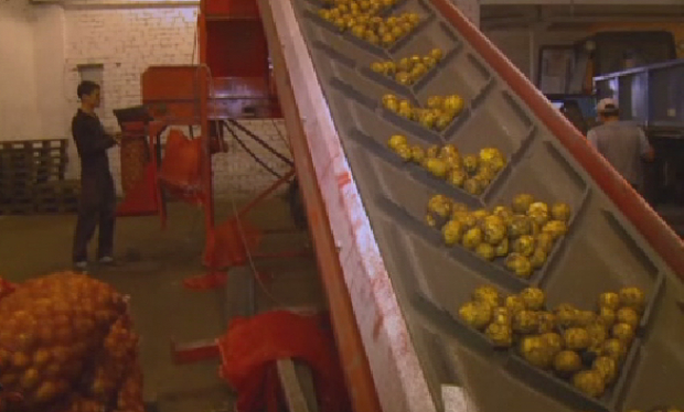 Почти пять тыс тонн продукции закупят в стабфонд Костанайской области