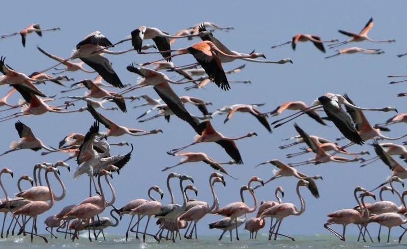Птичий путь Центральной Азии изучают в Индии