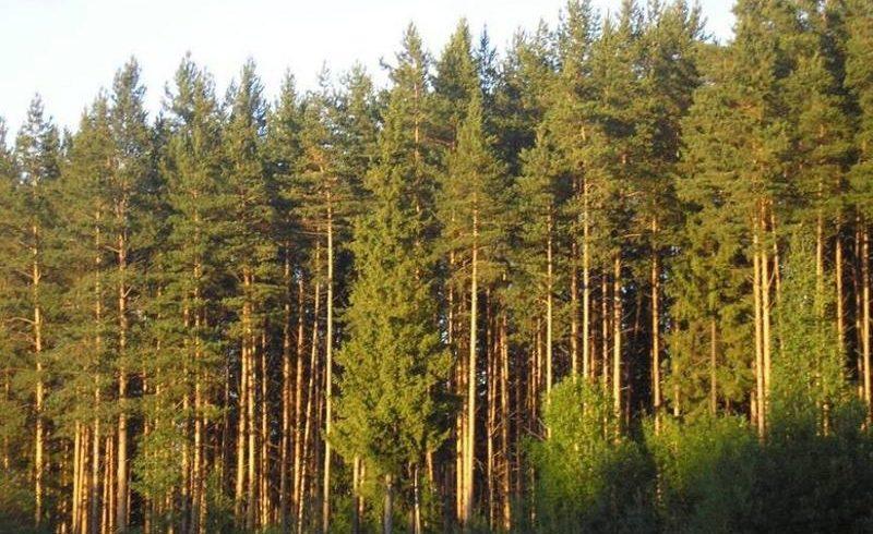 Санитарное состояние лесов оценили в Северном Казахстане
