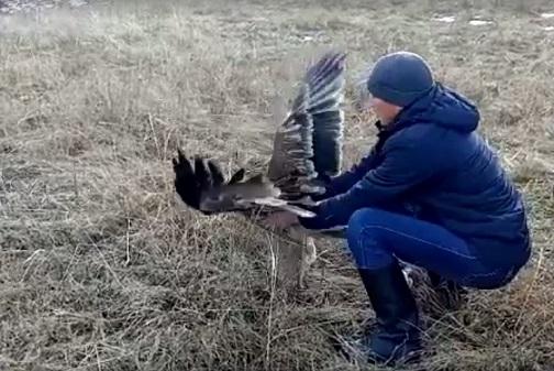 Краснокнижного орла спасли в Восточно-Казахстанской области