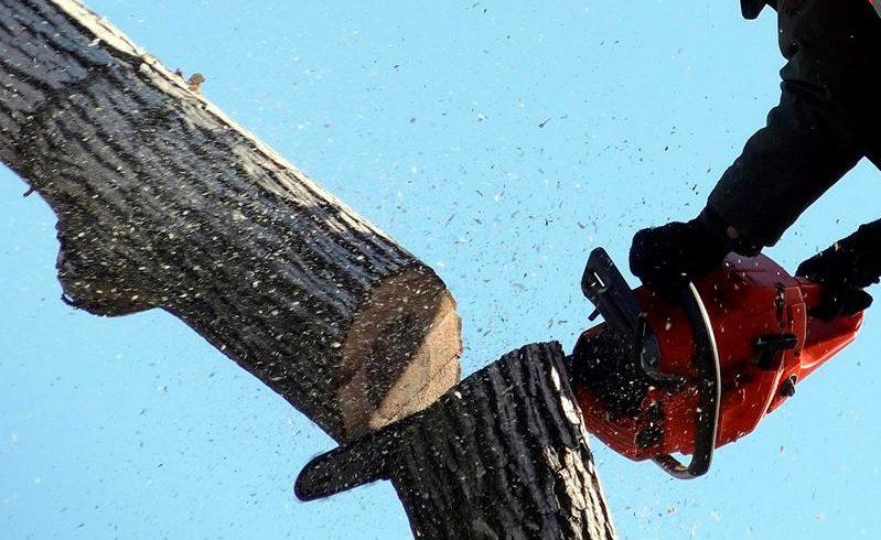 Жесткие требования за незаконный снос деревьев появятся в Алматы