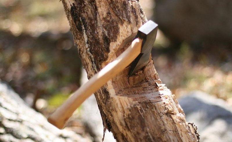 На 3,7 млн тенге оштрафовали подрядчика, вырубившего деревья вдоль русел рек Актобе