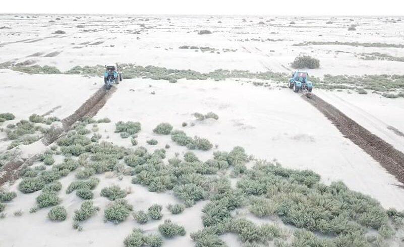 Пять миллионов саженцев саксаула посажено за два года на осушенном дне Аральского моря