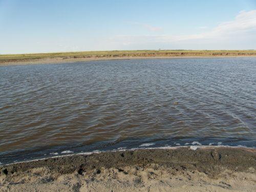 Озеро Маралды получит квоту на добычу цист рачка «Артемия салина»