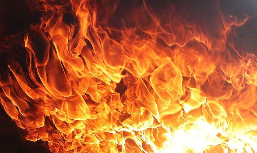 В 2020 году на территории государственного лесного фонда было потушено 694 лесных пожара