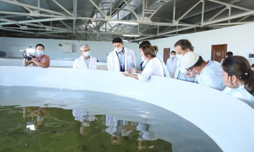 Маңғыстау облысында 2030 жылға қарай жылына 100 мың тонна балық өсіріледі